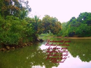 mangoboom brightest wishes